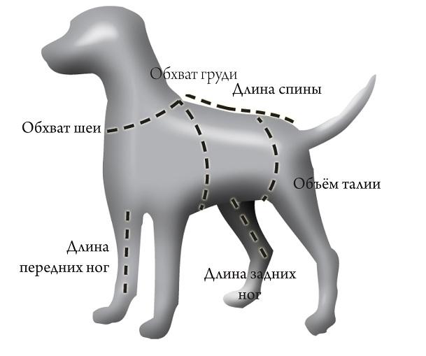 измерение собаки